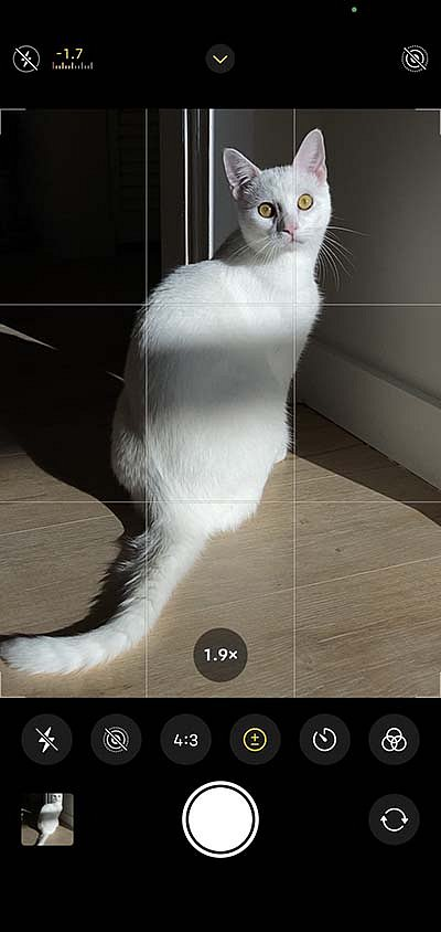 Screen-Grid.jpg